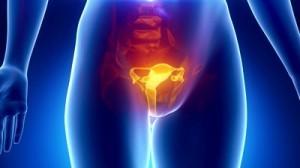 Репродуктивные органы