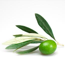 Масло чайного дерева: применение для лица при прыщах и демодекозе, изготовление масок и льда