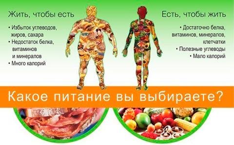 куриные грудки правильное питание